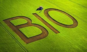 Agricoltura biologica: le caratteristiche
